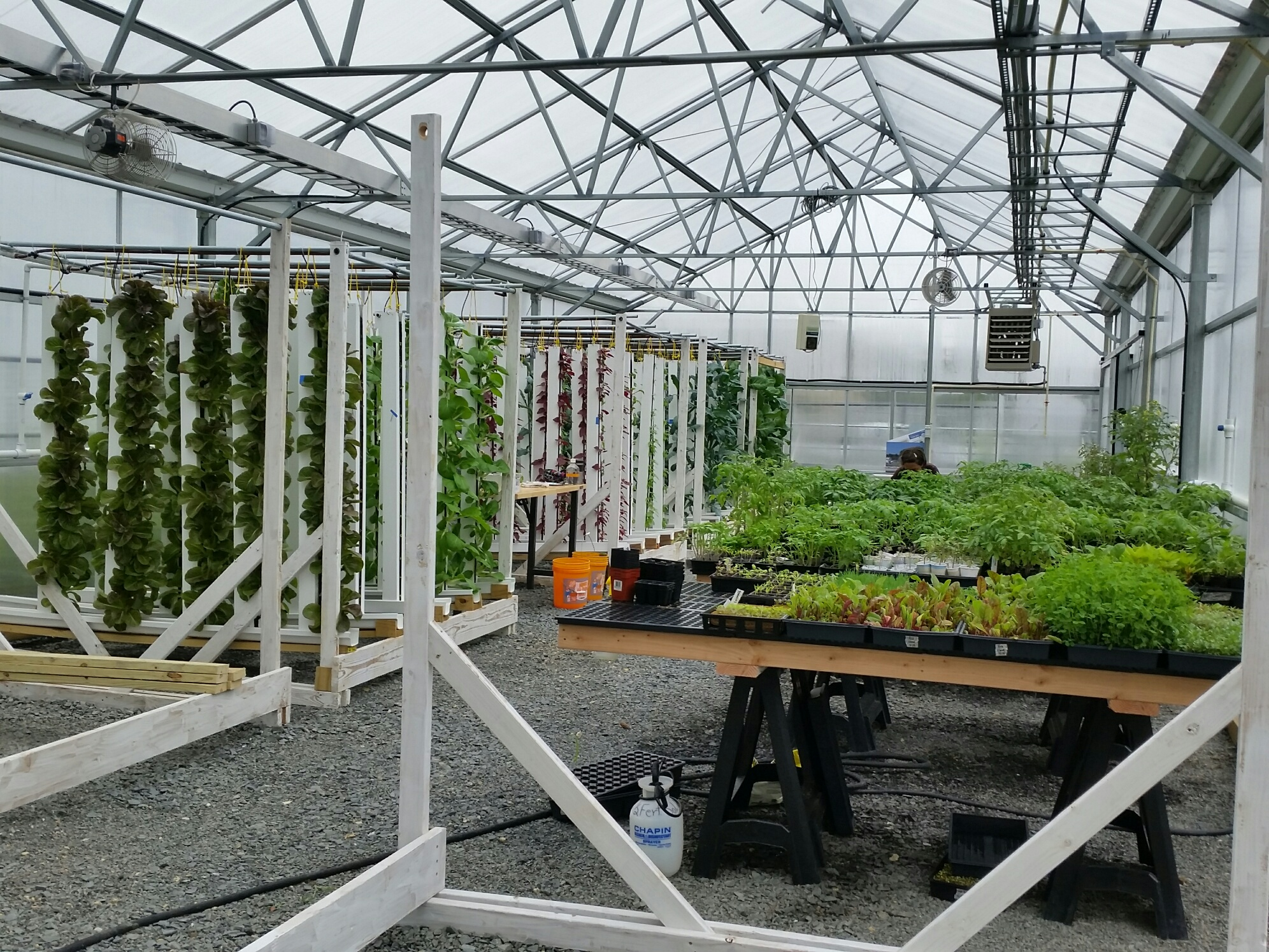 Kula Farm Inside Greenhouse